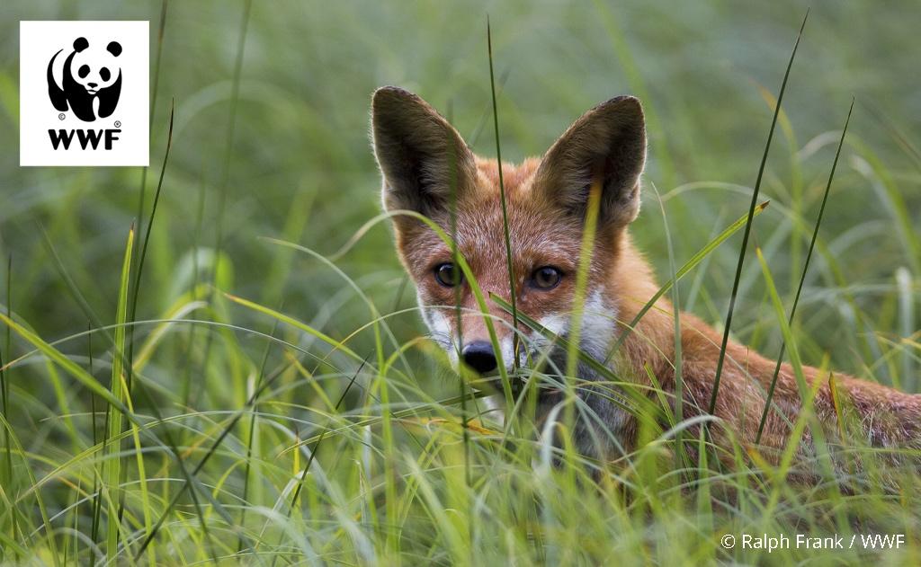 FuchsErlebnistourenWWFLogocRalphFrankWWFklein